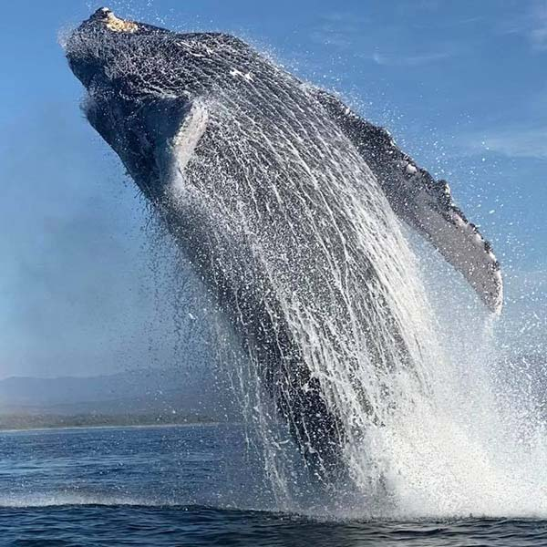 Boat Tours and Whale Whatching in Mazunte Oaxaca, Mexico