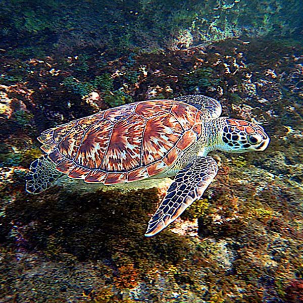 The turtle museum is one of the big attractions of Mazunte, Oaxaca. You can see lot of different turtle species there.