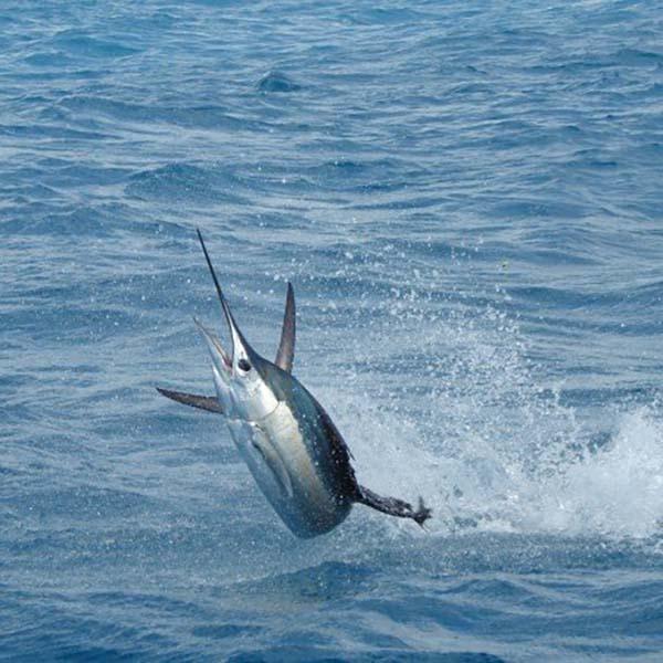 Pesca Deportiva con Israel Martinez